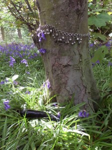 bluebells tiptoe